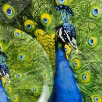 Zara-Home - Peacock-Dinnerware